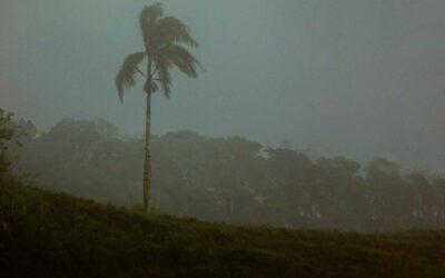Hurricane Dorian Appeal